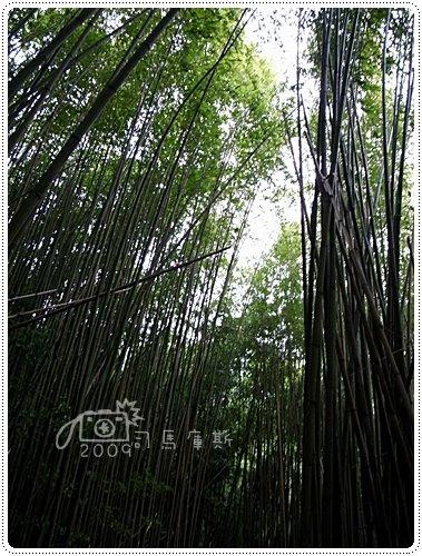 司馬庫斯巨木 (7)