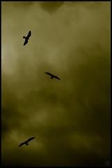 Yellow ... Lost (Marc Benslahdine) Tags: paris dark pigeon pigeons ciel nuages lightroom pontdesarts darkscape tamronspaf1750mmf28xrdiii canoneos400d marcopix tripax marcbenslahdine wwwmarcopixcom wwwfacebookcommarcopix marcopixcom