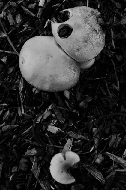 b&w mushrooms