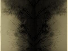 (dogs and vibes) Tags: mist tasmania brunyisland ferntree