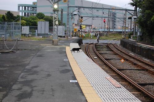 黒猫とクロネコヤマト