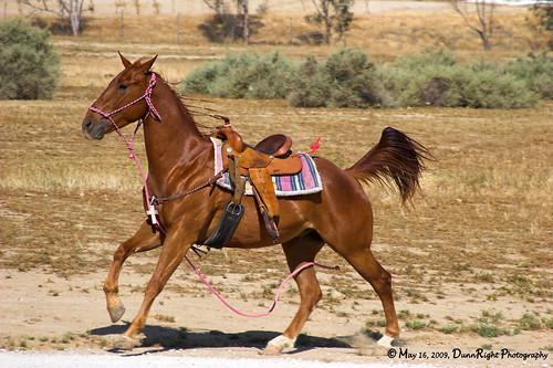 appaloosa horse club. Appaloosa Horse Club #6. Photo taken 5/16/09 at Ethel#39;s Old Corral Cafe in