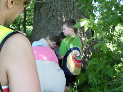 we found the cache in a hole in a tree
