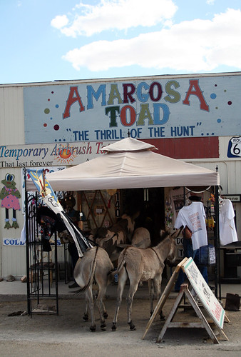 The Preferred Burro Shopping Stop