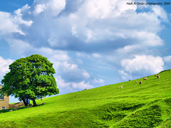 Life is Colorful (Hadi Al-Sinan Photography) Tags: life windows wallpaper sky urban tree green rural landscape manchester is interestingness colorful buxton district peak olympus explore goats xp hadi  e500     polestar    platinumphoto  flickraward    alsinan