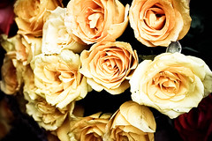 (Deepatheawesome) Tags: india flower rose yellow market mumbai mws dadarflowermarket