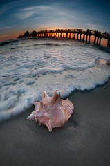 Naples Pier with Conch (Orlando Photo Chic) Tags: ocean sunset sky sun clouds pier sand surf waves gulf florida tide naples pick conch conchshell naplespier