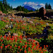 Mt. Bachelor and Red Indian Paintbrush