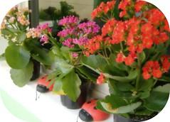 Quinta Flower... (Joana Joaninha) Tags: amor dia belohorizonte quintaflower esperar besouro paciencia joanajoaninha