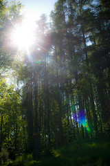 through the trees (Stefan Lorse) Tags: summer sun bike forest germany deutschland tour sommer saxony sachsen sonne wald fahrrad lensflares sigma2470f28dgexmacro blendenflecke canoneos50d