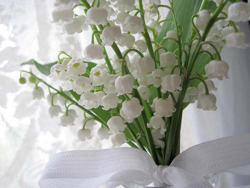 Lily-of-the-Valley 1