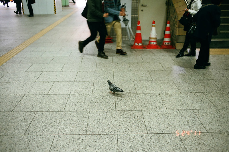 PigeonShinjukuStation (7 of 13)