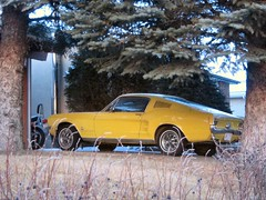 1967 Ford Mustang (dave_7) Tags: ford car 1967 mustang 67 lethbridge fastback
