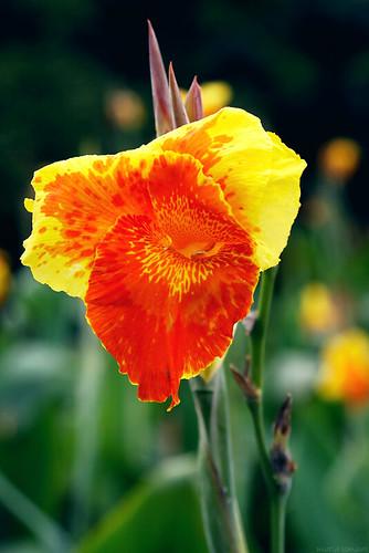 Praktikum bunga majemuk islamiardela sumber httpfarm4aticflickr36493303386922aff8992631g ccuart Gallery