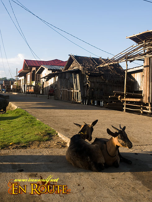 Pagasinan Road Goats