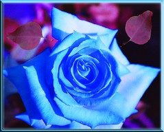 BLUE BLUE MY LOVE IS BLUE (fantartsy JJ *2013 year of LOVE!*) Tags: flowers blue friends macro art love floral beauty rose photoshop bokeh sensational theblues arosebyanyothername blueribbonwinner loveisblue fineartphotos bokehlicious platinumphoto anawesomeshot flowersgroup diamondclassphotographer flickrdiamond ysplix rubyphotographer thebestgallery finephotoshopdesign passionateinspirations novavitanewlife heavenlycaptures musicsbest secretenchantedgardens beautyofimagination thenewselectbest flickrenvythebesttm