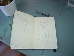 Amaryllis buds (mbrichmond) Tags: sketch drawing sketchbook amaryllis inkdrawing linedrawing penandink dailydrawing flowerbud contourdrawing moleskinesketchbook botanicaldrawing amaryllisbud flowerdrawing