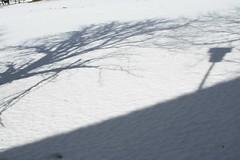 Maaling (anuwintschalek) Tags: schnee winter horse white snow nature landscape shadows wind february 28135is lumi schatten pferd 2009 niedersterreich thaw sula talv fhn tauwetter valge hobune puchbergamschneeberg tuuline varjud canoneos1000d