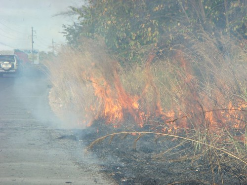 Bush fire on the Panamerican Hwy, Panama.