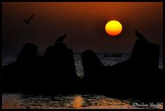 Before the Sun Sinking ! (Bashar Shglila) Tags: sunset sea sun seagull before libya tripoli soe sinking libyen lbia flickrsbest libi libiya liviya libija theunforgettablepictures goldstaraward     lbija  lby libja lbya liiba livi
