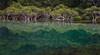 Green (dicktay2000) Tags: trees reflection green water sydney australia nsw bundeena mainbar canonef24105mmf4lisusm pfogold thechallengefactory pregamewinner