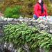 Stone wall - England Study Abroad