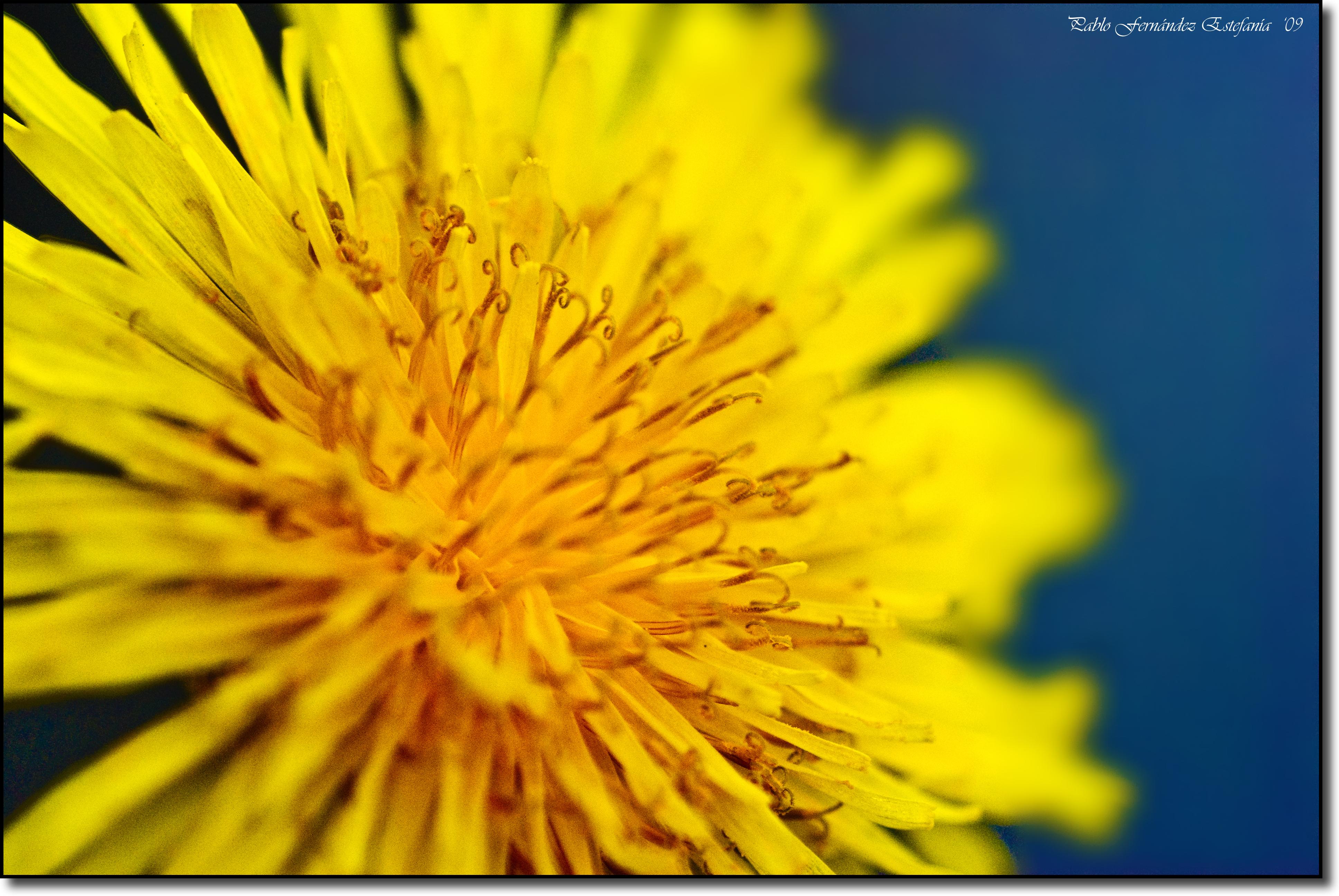 3357329642 19fecb8d0a o First Flower