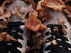 Epistemologa. (Felipe Smides) Tags: chile street naturaleza macro tree art fall hoja texture textura nature hojas calle shoes arte feel science caminos sueos pies rbol otoo roads felipe texturas placer ciencia creams sentir zapatillas sabores callejero artisticexpression levantarse tacto tillas instantfave mywinners aplusphoto beatifulcapture artlegacy smides fotografiasmides funfanphotos felipesmides car