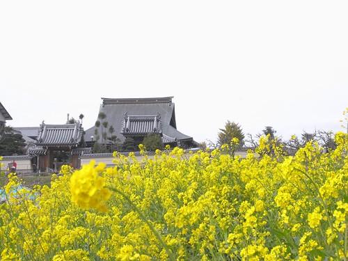 2009年-桜@山の辺の道-05