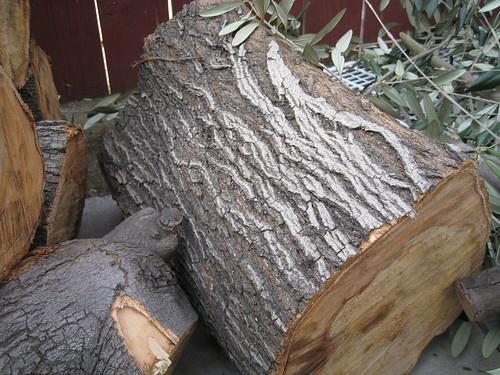 European olive bark