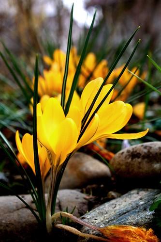 flower3 von Ihnen.
