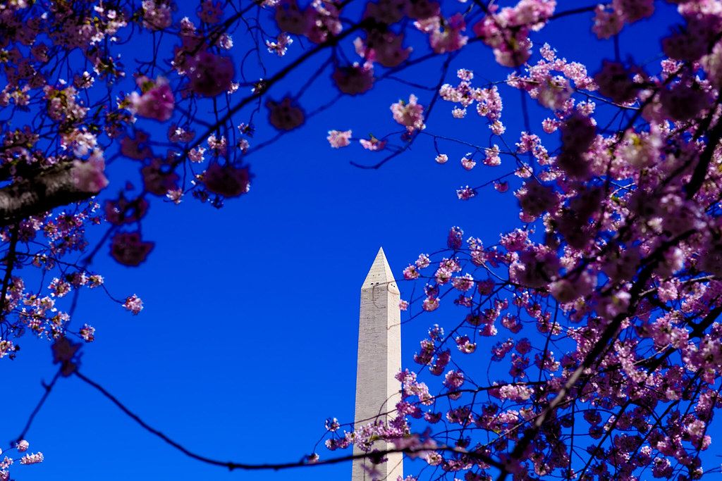 Washington D.C. Cherry Blossoms (7 of 7)
