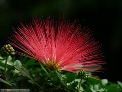 Rayos de Color (Jaime J. Quiel) Tags: naturaleza flores macrofotografía