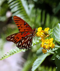 Butterfly At The Magic Kingdom (rustyallie) Tags: butterfly disneysmagickingdom disneywildlife
