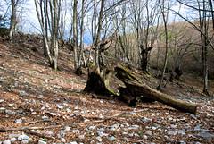 DSC_1337-1 (Mirko Simeoni) Tags: horses mountains montagna cavalli bosco campitello fontanili montilucretili pratone lucretili snaptheworld