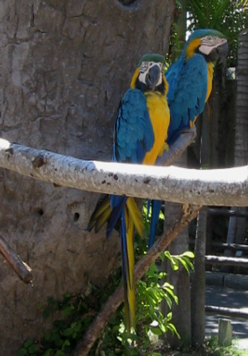Macaw 2 Santa Barbara Zoo