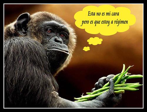 Regimen ...