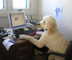 Otis At Work (FunnyBiz) Tags: dogdays funnybusiness