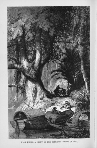 001d-Los Ríos Amazonas y Madeira 1875- Alto bajo un gitante de la selva virgen en el Madeira
