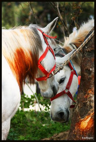 Horses in Princess Islands