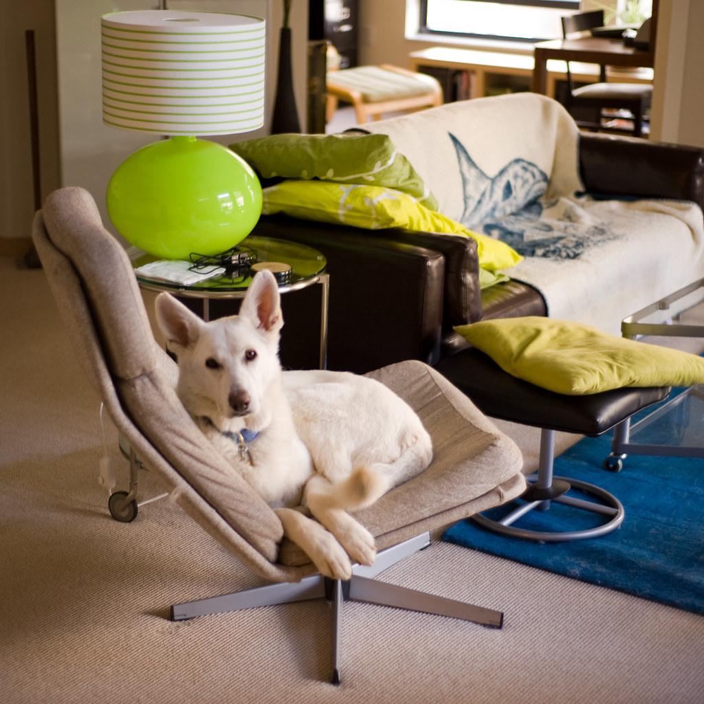 Ekko's New Chair