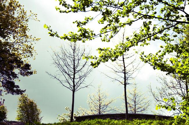 träd på kulle