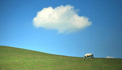 A Dream (AIeksandra) Tags: cloud green field minimalism balkan balkans serbia macedonia landscape horse minimalist