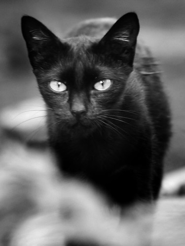 The Eyes of Black Cat