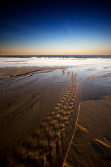 Waves (Amar Raavi) Tags: ocean sunset sky slr bird beach nature water canon dark island sand waves unitedstates massachusetts newengland sigma bluesky atlantic estuary marsh dslr northeast atlanticocean newbury amar newburyport plumisland merrimackriver rivermouth seepage sigma18200mm raavi nationalwildliferefugee waterseepage watermarsh canoneos40d plumislandbeach plumislandestuary unitedstatesfishandwildlifeservice amarraavi parkerrivernationalwildliferefugee