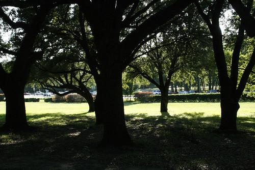 Lazy Tree