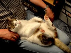 Nothing better than a warm lap (Feodora Umarov) Tags: sleeping pet cute cat pose belly