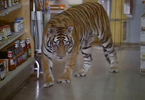 tigerinasupermarket