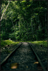Runaway train... never coming back (Neerod [ www.shahnewazkarim.com ]) Tags: leaves lines forest train tracks reserve sylhet bangladesh lawwachara gettyimagesbangladeshq2