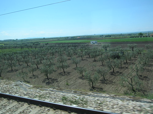 Country side on way to Vieste (where Isabella lives) by train - reminded me of around Walla Walla plus the olive trees.